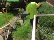 Mr Dan's Lawn Care