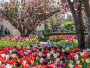 Tulip Time Southern Highlands