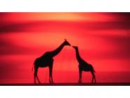 Z For Giraffe