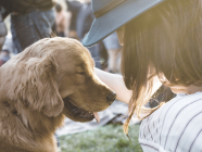 Dog Parks And Off-Leash Areas Around Town
