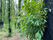 BUSHFIRE RECOVERY // An update from Wingecarribee Shire Council