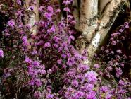 Danellen Horticulture