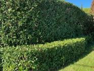Pineleigh Plants