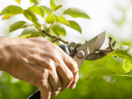 How To Prune Your Southern Highlands Garden