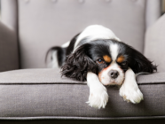 How To Identify The Signs Of Rodent Poisoning In Your Pet