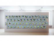 The Last 50 Orange-Bellied Parrots Exhibition