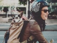 THE FOLD LOVES :: A Weekend With Your Pooch!
